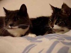 The two talking cats - 2 sprechende Katzen ;-) - YouTube