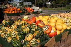 Nice squash and pumpkin display