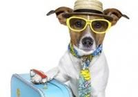 Summer Travel: Road Trips - Brought to You by Best Western | Cesar Millan