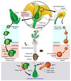 Biology for Kids: Flowering Plants
