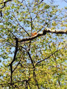 En liten Ekorn der som spiser