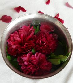 Lotosblume Glasvasen Japanischer Stil Pflanzen Nach Feng Shui ... Pflanzen Nach Feng Shui Energie Haus