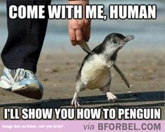 Happy Feet Wants To Show Me How To Dance…