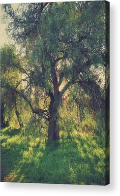 Trees Acrylic Print featuring the photograph Shine Your Light by Laurie Search