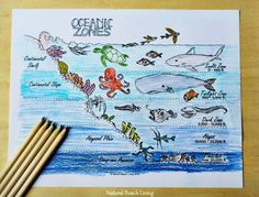 The Best Ocean Unit Study for Kids, Homeschool education, Marine Biology for Kids, Under the Sea Loose Parts play and Summer Nature Table, Free Printables Sea Activities, Preschool Science Activities, Childcare Activities, Learning Activities, Biology For Kids, Science For Kids, Science Fair, Ocean Lesson Plans, Ocean Zones