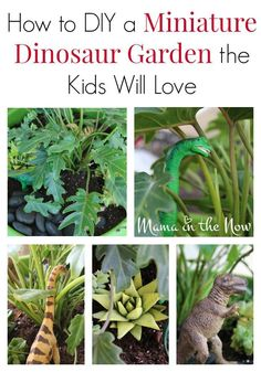 Learn how to make a DIY miniature dinosaur garden that your kids will love! This is a great fairy garden substitute for your children who love dinosaurs. If your kids love dinosaurs then make this fun dinosaur garden craft with them this spring! Dinosaur Garden, Dinosaur Play, Dinosaur Birthday, Parenting Win, Create A Fairy, Garden Crafts, Garden Kids, Diy Crafts, Different Vegetables