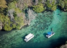 Crystal River Manatee Tours - Swim With The Manatees in Crystal River, Florida
