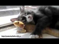 """23 amicizie """"particolari"""" tra animali di specie diversa - YouTube"""