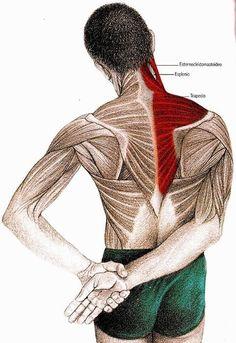 Canınızı acıtan boyun ağrısından kurtaran 5 egzersiz! - Neck And Shoulder Exercises, Neck And Shoulder Pain, Neck Pain, Pilates, Self Treatment, Muscle Anatomy, Flexibility Workout, Yoga Routine, Massage Therapy