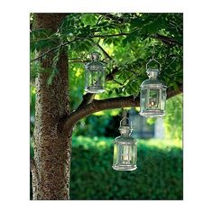 Lanterns ($4 each) hung from a tree in an outdoor setting set such a romantic tone.