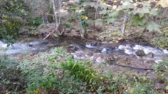 Paisaje senda del río Troncoso Plants, Scenery, Fotografia, Plant, Planets