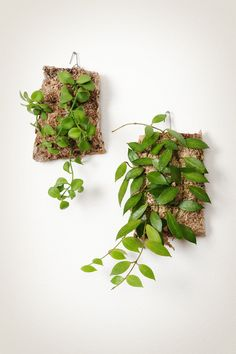 These epiphytic wall plaques are like tiny swatches of flora cut from the heart of the jungle.