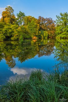 Perfect Reflection, by Skotschier-Photography...... #BadArolsen #Trees #Lake #Germany #Reflection