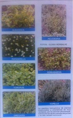 Hidroponía : Plantas aromáticas, hierbas y especias hidropónica...