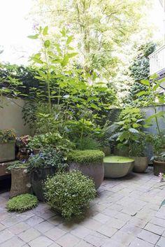 #courtyardgarden