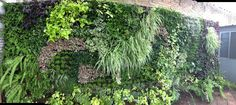 all Green, Vertical Garden