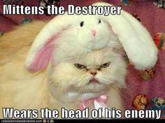 Mittens the destroyer