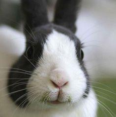 :3 bunny derp