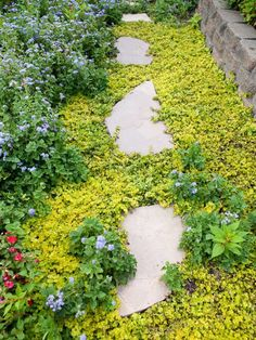 Creeping Jenny Landscaping With Rocks, Front Yard Landscaping, Landscaping Ideas, Outdoor Landscaping, Creeping Jenny Plant, Easy Care Plants, Backyard Water Feature, Olive Garden, Garden Yard Ideas