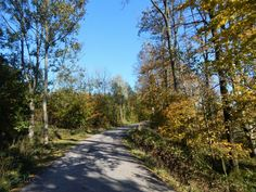 60plus: Prechádzka v jesennom lese