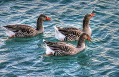 New free stock photo of water animals birds   Download it on Pexels