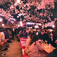 Maruyama Park in Kyoto would have to be one of the most amazing places to enjoy hanami, especially at night when all the trees are lit up with the smell of food wafts over the crowds. Tokyo Japan Travel, Go To Japan, Japan Trip, Okinawa Japan, Aesthetic Japan, Travel Aesthetic, Beautiful Places In Japan, Amazing Places, Cherry Blossom Japan