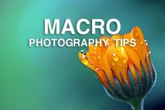 A selection of macro photography tutorials to help you improve your macro photos of all things small, whether that's bugs and insects or close-ups of leaves.