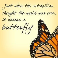 butterfly quote I made