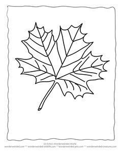 Pictures of Maple Leaves to Color Maple Leaf Coloring Sheets