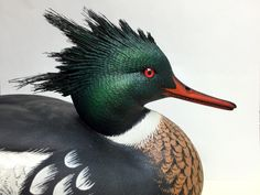 In this issue of Wildfowl Carving Magazine, we will learn about MacGillivray's Warbler and how to build a decoy stand. We will also walk you through how to carve a redheaded decoy and showcase Gary Eigenberger. Plus, all about merganser crests! Decoy Carving, Duck Decoys, Shorebirds, Ocean City, Bird Art, Pattern Art, Folk Art, Art Projects, Ducks