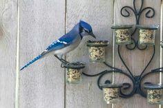 Genius bird feeder