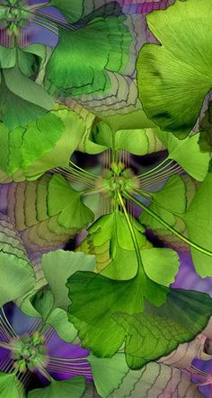 """La Galería Popurrí — """"Ginkgo,"""" by Gerhard Hillmann (detail) Go Green, Green And Purple, Spring Green, Watercolor Negative Painting, Silk Painting, Shades Of Purple, My Favorite Color, Beautiful Images, New Art"""