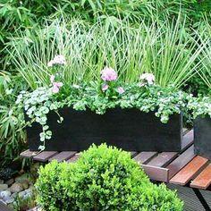 Abonnement De Jardini Re Fleurie Pour Balcon Primula Et Foug Res