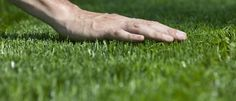 Orso Matteo effettua qualsiasi operazione necessaria per far splendere il tuo giardino: http://orsomatteo.it/index.php/manutenzione-verde/ #manutenzioneverde #manutenzionegiardino #rovigo