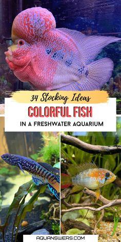 Best Aquarium Fish, Coral Aquarium, Planted Aquarium, Fish Aquariums, Tropical Freshwater Fish, Freshwater Aquarium Fish, Aquarium Design, Aquarium Ideas, Aquarium Setup