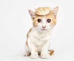 オシャレな帽子が可愛いすぎる!猫を救うために撮影された写真作品が話題に   ガジェット通信