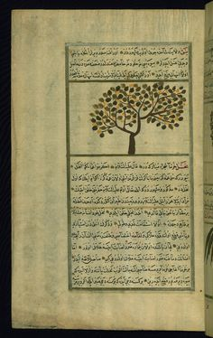 This illustration depicts a lotus tree (nabq).  Wonders of Creation  by Qazwīnī 1293 was translated to Turkish in 1717  completed by Rūzmah-ʾi Nāthānī - W659