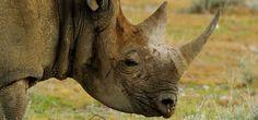 Enciclopedia animal | Animales de la montaña - Descripción del hábitat - A Spanish animal encyclopedia resource for learning about animals and habitats.