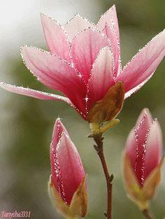 """Удивительно нежные и красивые мини открытки """"Весенние цветы"""". Обсуждение на LiveInternet - Российский Сервис Онлайн-Дневников"""