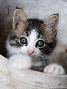Looks just like my daughter's kitten, Eowyn!  :)