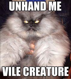 cat memes - Google Search