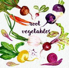 Vegetables watercolor clipart. Digital clipart hand drawn. SET vegetables. Fresh red vegitables, beet, carrot,vegetable logo, juicy