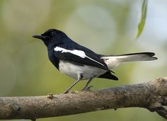 Common-Birds-Of-Bangladesh Toutist Places TOUTIST PLACES : PHOTO / CONTENTS  FROM  IN.PINTEREST.COM #TRAVEL #EDUCRATSWEB
