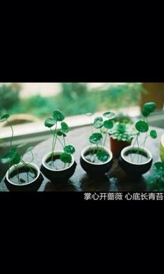 Coins is grass, love this one green,. Garden Trees, Garden Plants, House Plants, Bottle Garden, Water Garden, Mini Plants, Indoor Plants, Indoor Flowers, Flower Words