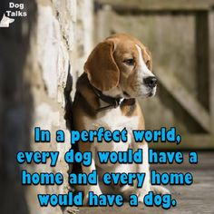 ~ EXACTLY.  SPAY/NEUTER YOUR PETS, MICROCHIP THEM, GIVE THEM LOTS & LOTS OF LOVE.  YOU CAN'T IMAGINE THE REWARDS YOU'LL RECEIVE ~