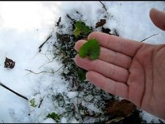 Finding Survival Food in The Winter Snow - http://prepping.fivedollararmy.com/uncategorized/finding-survival-food-in-the-winter-snow/