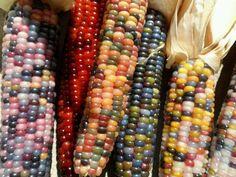 Cherokee Glass Gem Indian Corn 300 Seeds. Non GMO, Heirloom