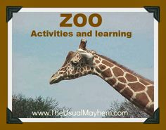 Week one of a two-week zoo theme of lessons from The Usual Mayhem. Zoo Activities, Educational Activities For Kids, Letter Activities, Preschool Letters, Preschool Ideas, Zoo Animals, Animals For Kids, Camp Counselor, Activity Ideas