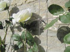 White roses on Tecni-Cable mini trellis