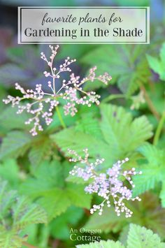 Favorite plants for gardening in the shade with tips and a surprise.